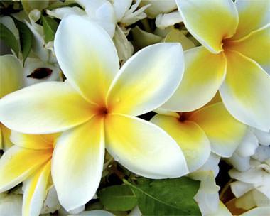 Исполнение желаний - Страница 2 Flowers